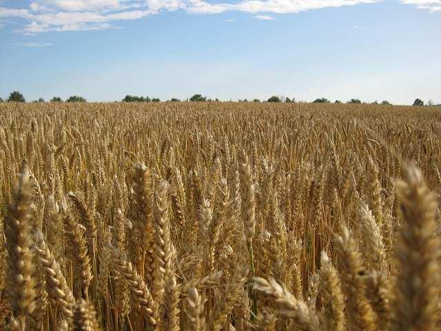 Agrarspekulationen