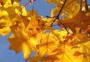 Herbstliche Stimmung im Goldmarkt – Kurseinbruch um rund 40 Dollar